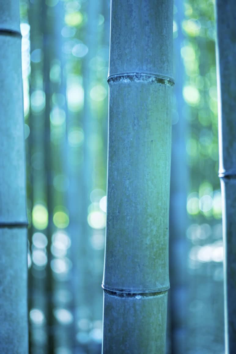 Japan Fotoreise, Bambus
